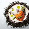 Toque Sea Urchin